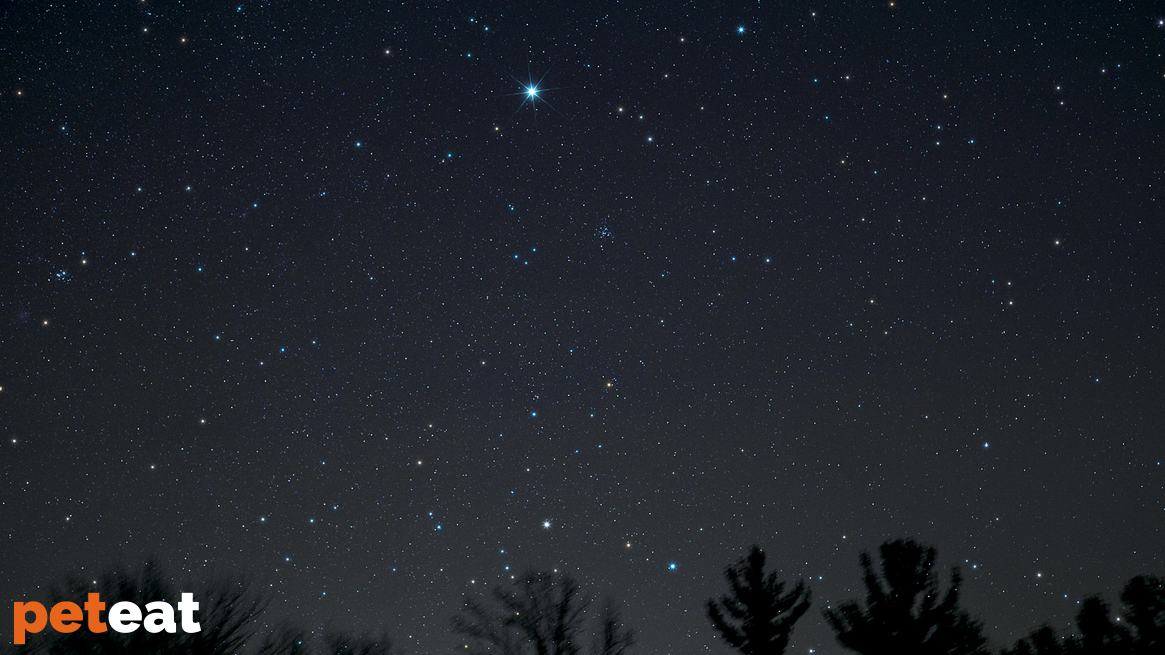 Canis Major, Canis Minor